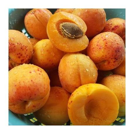 Aprikosenkernöl, kaltgepresst - 30 ml und 100 ml