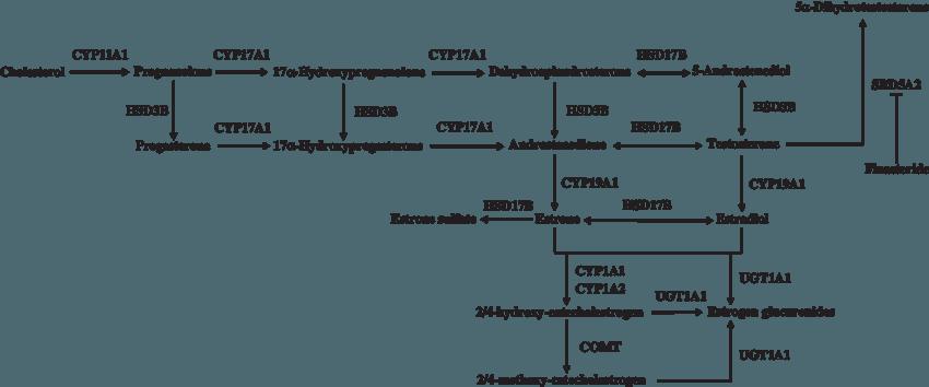Sexualsteroidhormone